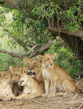 5 Days Special Murchison Falls National Park