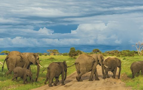 8 Days Best Northern Tanzania Safari features a typical Tanzanian safari that takes you through the highlights of renowned parks of northern Tanzania