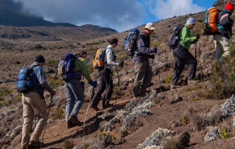 9 Days Kilimanjaro Summit Climbing Lemosho Route is an Adventurous tour, featuring Tanzania Mountain Climbing. Lemosho is considered the most beautiful route on Kilimanjaro