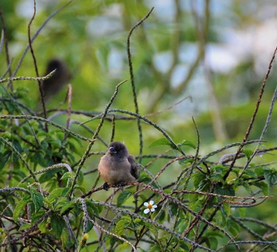22 Days Uganda Birding Watching Safari Tour, Uganda is immensely endowed with a variety of bird species and because of this it is referred to as Africa's premier birding destination