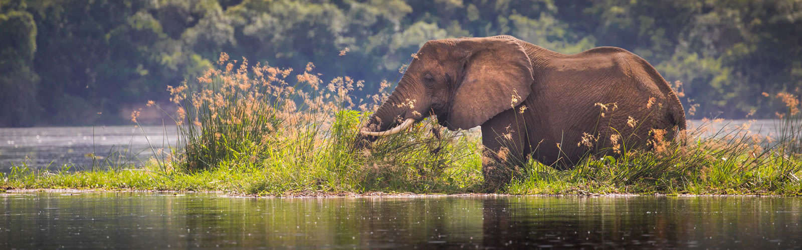 3 Days Murchison falls National park Wilderness exploration Safari