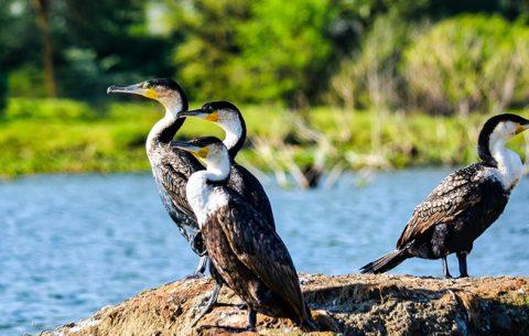 6 Days Kenya Great Rift Valley Lakes Safari & Wildlife Tour will take you to explore some of Kenya's Great Rift Valley Lakes and game parks. Were You will experience wildlife game viewing