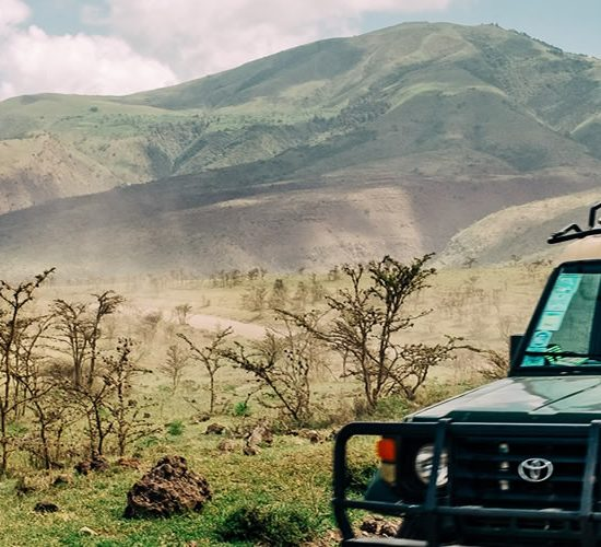 10 Days Best of Tanzania Tours & Wildlife Safari, Tarangire retains an air of undiscovered Africa, as it is less visited than other northern Tanzanian parks. It is a haven for birds. 550 bird species, the world's largest selection found in one habitat, find their home in Tarangire