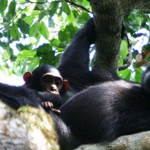 10 Days Explore Tanzania's  wilderness.
