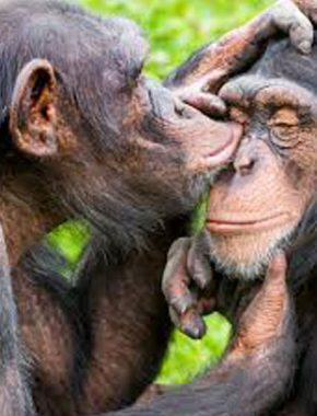 10 Days Gorilla safari tour