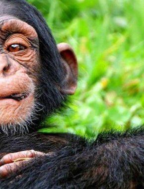 10 Days Gorilla trekking Safari in Congo and Uganda