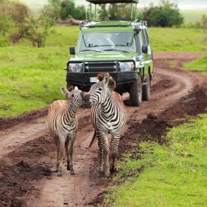 12 Days Uganda Primate Safari