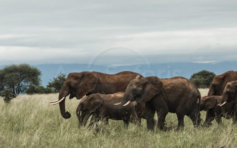 10 days Kenya and Tanzania wildlife Safari is one experience across Kenya and Tanzania destinations such as Arusha, Serengeti national park, Ngorongoro crater, Maasai Mara national park