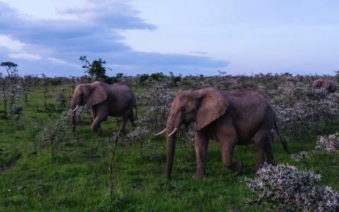 15Days Uganda Safari gorilla tracking & wildlife Combined