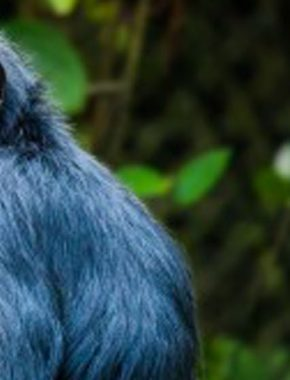 15 Days Gorilla safari tour