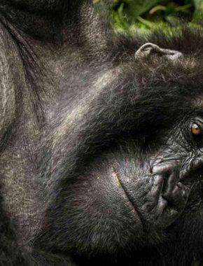15 Days uganda gorilla safari tour combined