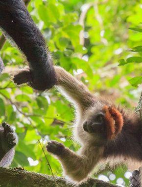 16 Days Uganda and Rwanda gorilla safari