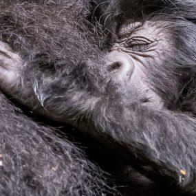 2 Days Gorilla Trekking Adventure