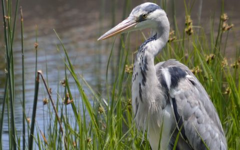 28 Days Wildlife and Birding Safari allow you to explore Uganda the leading destination for birding safaris. Uganda is among the top five birding destinations in Africa where you can have a chance to see over 1066 bird species