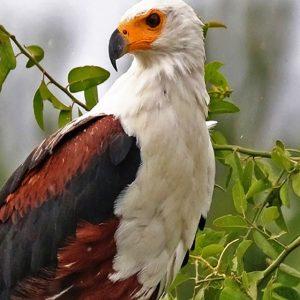 28 Days Wildlife and Birding Safari