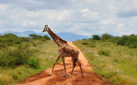 This 3 Days Big Five safari Murchison Falls National Parkis an all around fun-filled trip in Uganda's Biggest national park. It is well known for being rich in wildlife including buffalo, elephant, lion, kob, and giraffe
