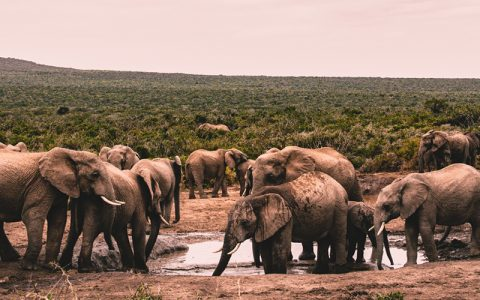 3 Days Queen Elizabeth National Park Magical Safari will take you to our famous Elizabeth National park, located in Western Uganda. along the way you will make a stop at the Equator for photo shoots
