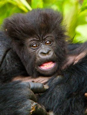 3 Days Gorilla Experience