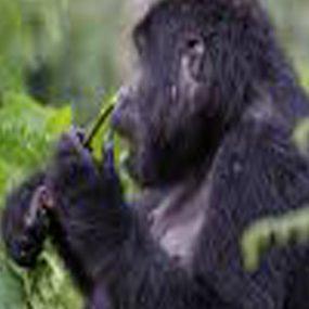 3 Days gorilla safari tour