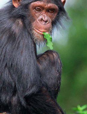3 Days gorilla safari tour-converted
