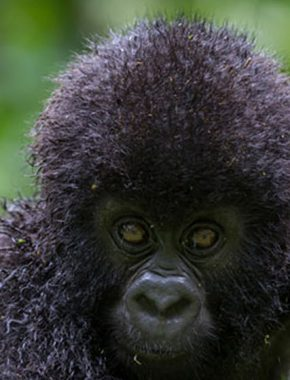 3 Days Magical Gorilla Tour And Culture