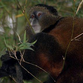 3 Days Nyungwe Chimpanzee tour