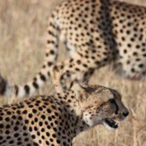 3 Days Rwanda Primate Safari Holiday
