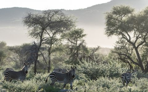 4 Days Lake Mburo National park, itlies along Mbarara Road with easy access of Kampala. It's an attractive park of rolling hills and open grass valleys covered in extensive acacia woodland; Mburo has markedly different fauna to other reserves as it is the only park in Uganda