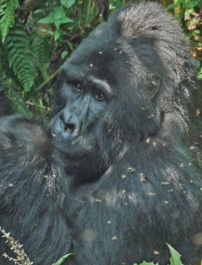 4 days Bwindi Impenetrable Forest 2