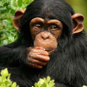 4 Days Congo Gorilla Trek Safari