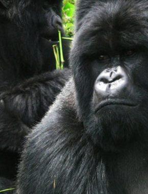 4 days gorilla trekking and Lake mburo safari