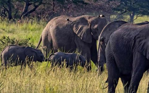 4 days Murchison Falls Ziwa Rhino Sanctuary lets you explore Murchison falls national park the largest of Uganda's national parks covering a total area of 5,308 kms with a pleasant wilderness area of rolling grasslands and wooded savannah