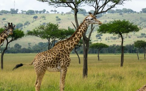 5 Days Kidepo Valley National park tour safari, Explore the true African wilderness that lies in the rugged, semi-arid valleys of Kidepo Valley National Park. It is Uganda's second-largest and most remote Park, but the stunning beauty