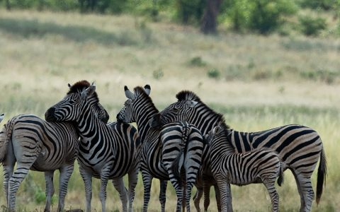 5 Days Lake Mburo national park and Queen Elizabeth tour is a beautiful wildlife safari that tourists can engage in case they need to experience the best wildlife tour. This 5 days Lake Mburo and Queen Elizabeth tour will take you to the western region and southwestern region of Uganda