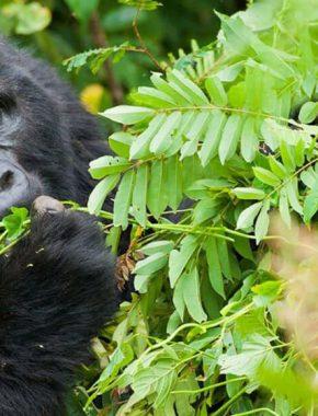 5 Days gorilla safari and Water rafting
