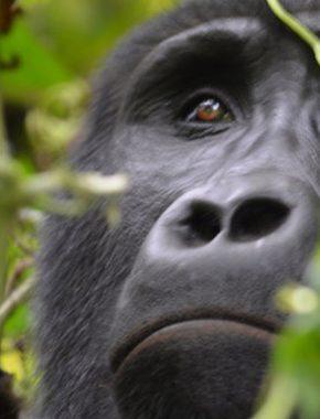 5 Days gorillas and widlife tour
