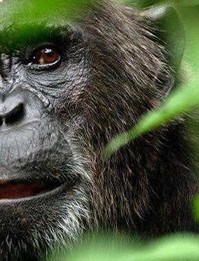 5 Days Gorillas and wildlife safari tour