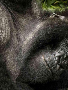 6 days gorilla safari tour