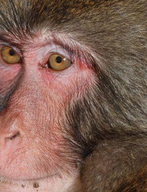6 Days gorillas and chimp trekking