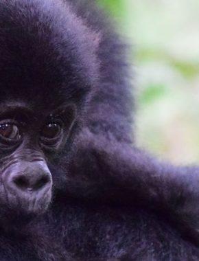 6 Days rwanda gorilla safari tour