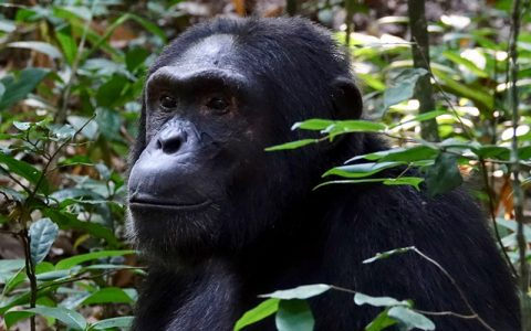 """7 Days Queen Elizabeth, Kibale National Park Uganda """"the pearl of Africa"""" is a land of distinction, endowed with unmatched wildlife, serene undulating hills covered with varied flora, the savannah jungle largely inhabited by several species of antelopes and rainforest with the musical accompaniment of birdlife"""
