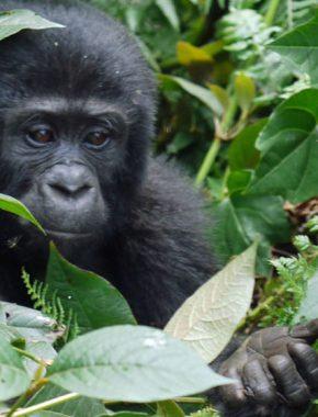 7 days gorilla safari tour