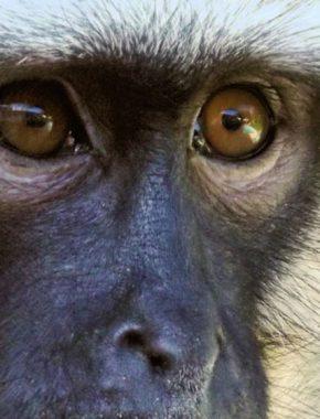 8 Days gorilla safari trip