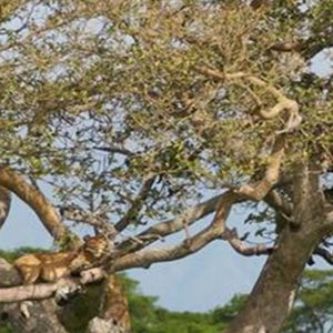 8 Days Rwanda Wildlife & Cultural tour