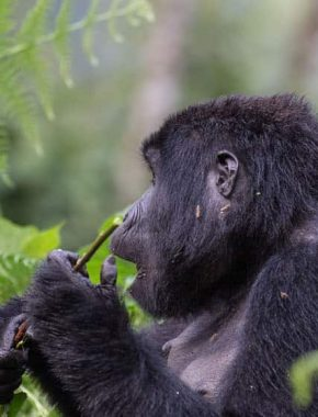9 Days And 8 Nights Best Of Chimpanzee And Game Viewing In Uganda
