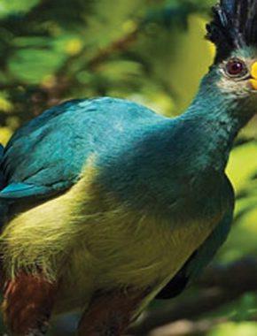 9DAYS BIRD WATCHING RWANDA