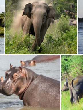 9 Day and 8 night Best of Uganda and Rwanda Wildlife, Primate trekking and culture safari