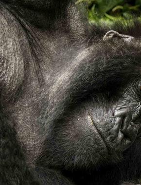 9 days / 8 nights Exploring Gorilla and Wildlife vacation in Uganda