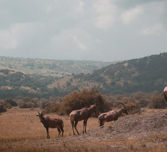 5 Days Rwanda Wildlife Exposure in Akagera National park