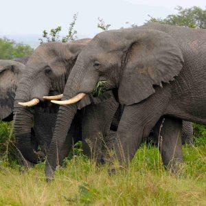 3 Days Big Five safari  Murchison Falls National Park